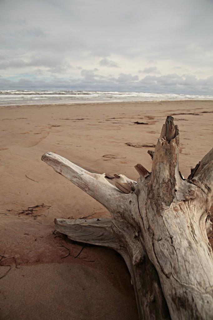 albero-toscana-spiaggia